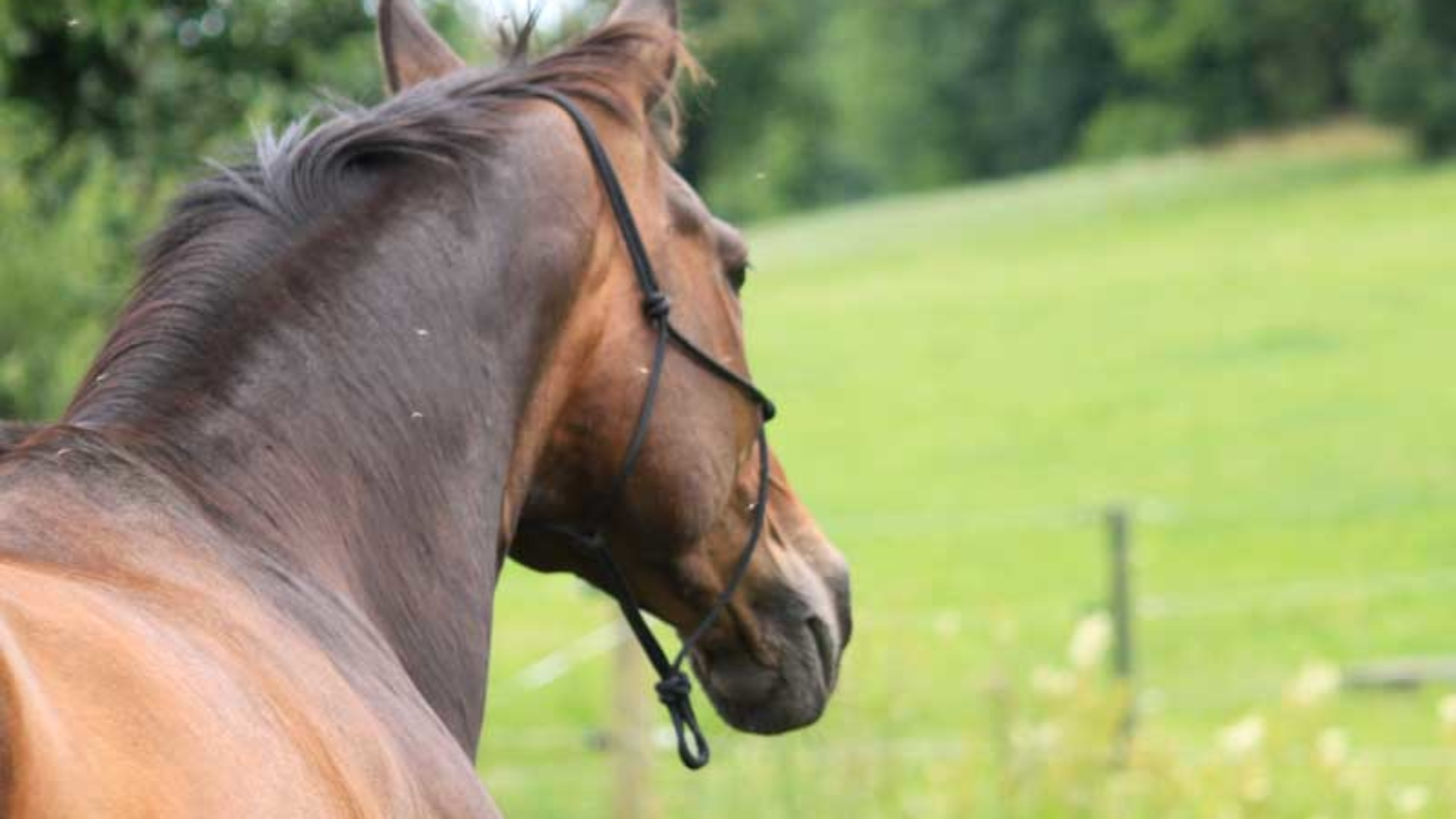 Agiles Pferd