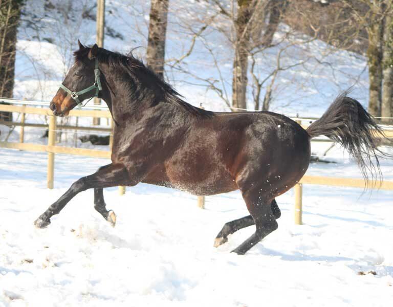 Energiegeladenes Pferd